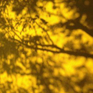 gelb fassade herbst
